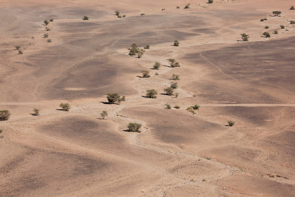 Desert landscapes with acacia trees, M'hamid, Sahara desert, Morocco.