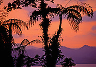 Rainforest around Lake Arenal at sunset. Costa Rica.<br />