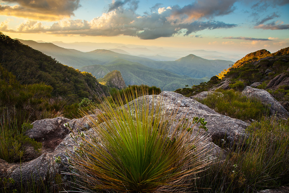 The veiw north down Barney Gorge between the East and West peaks of Mt Barney at sunset. Above 1000m elevation the vegetation becomes montane heath on the low nutrient rocky peaks.