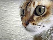 Good-bye Daisy Cat