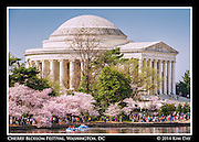 Delicate pink blossom surround the Jefferson Memorial along the tidal basin<br /> 2014 Cherry Blossom Festival - Washington DC<br /> April 13, 2014