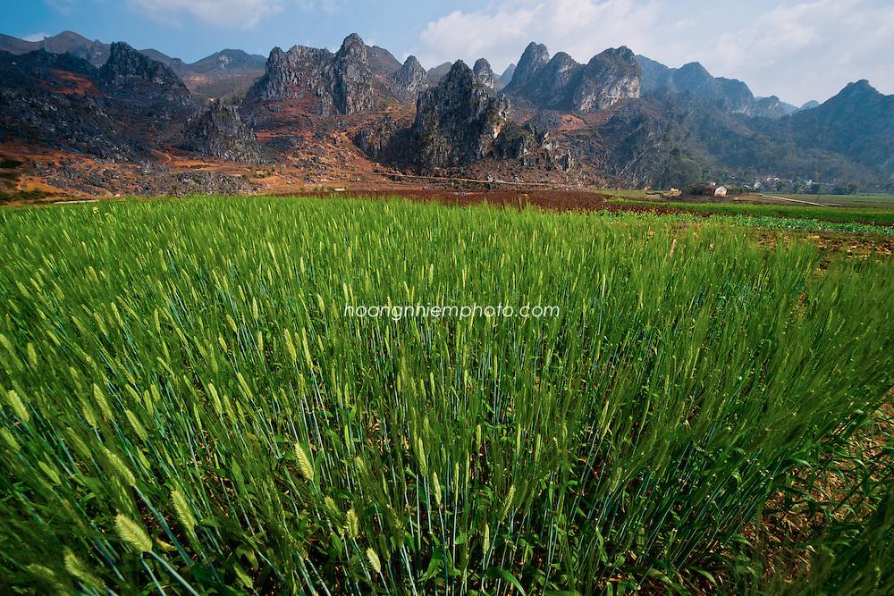 Vietnam Images-landscape-nature-Ha Giang phong cảnh việt nam