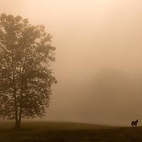 Horse in Fog 02 - Cades Cove, GSMNP