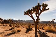 Hidden Valley, Joshua Tree NP, California, USA.