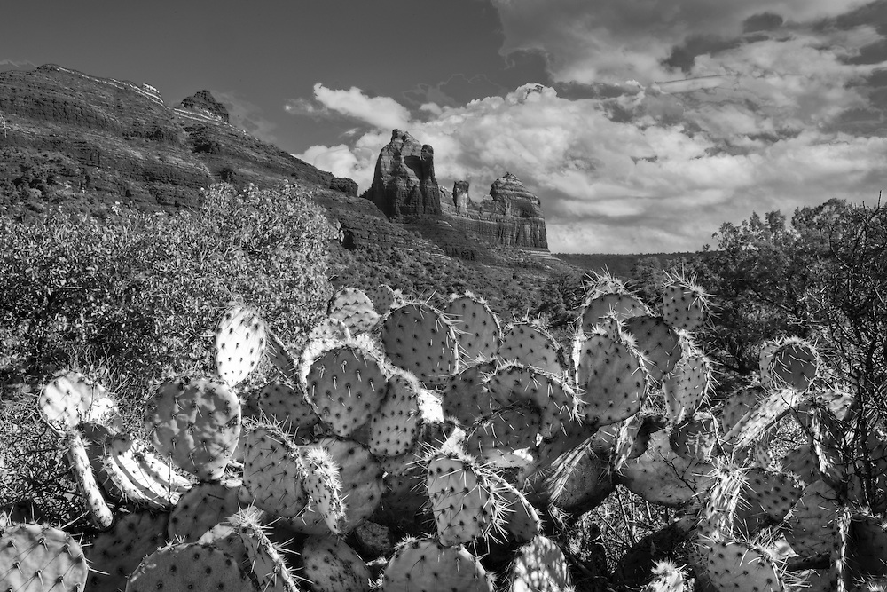 black and white image of a sedona arizona landscape with prickly pear cactus as a foreground element
