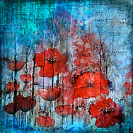 Stylized painterly red poppies and hibiscus flowers on an abstract textured blue background