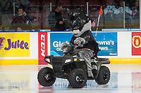 KELOWNA, CANADA - OCTOBER 31: Rocky Racoon rides his Polaris Sportsman quad on the ice dressed as Batman on October 31, 2015 at Prospera Place in Kelowna, British Columbia, Canada.  (Photo by Marissa Baecker/Shoot the Breeze)  *** Local Caption *** Rocky Racoon;