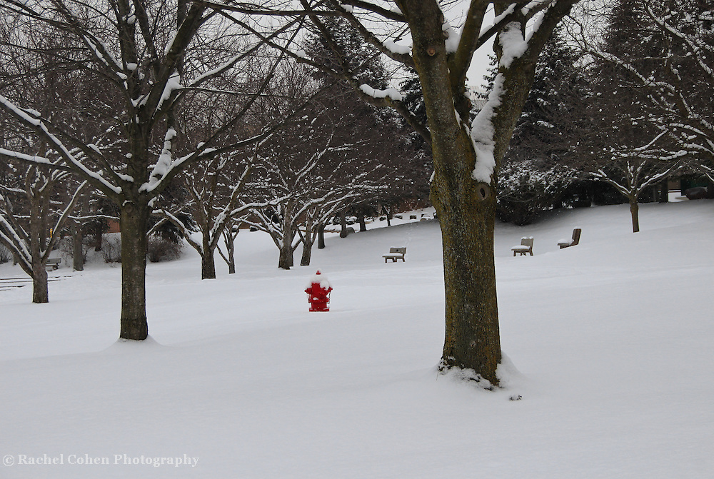 &quot;Little Red&quot;<br /> <br /> A wonderful bright red fire hydrant shines in this beautiful snowy winter scene!!<br /> <br /> Winter in Michigan by Rachel Cohen Winter in Michigan!<br /> <br /> Beautiful winter scenes, winter wonderlands, and lone trees in winter!<br /> <br /> Images in color, B&amp;W, and using selective color.<br /> <br /> If you love winter, snow, trees, rolling hills, and lone trees then you'll find a lovely selection!! <br /> <br /> Winter in Michigan by Rachel Cohen