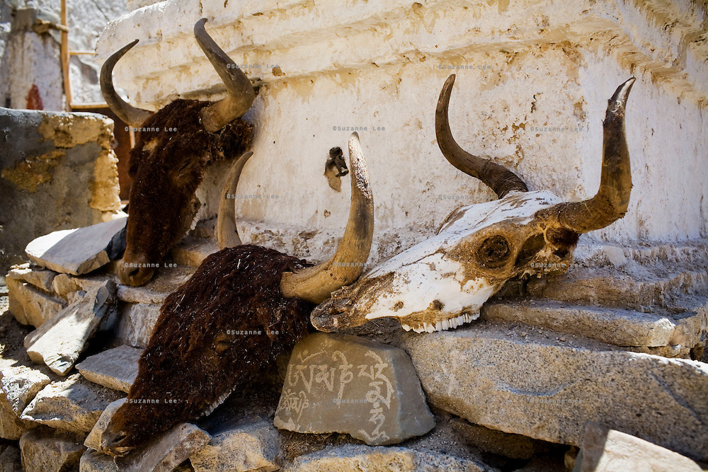 Yak skulls left out to dry in the sun under a chorten with prayer stones in the compound of a house in the valley of Ulley. Yak meat is a staple in Ladakhi diet. Ulley Valley is a valley with a scattered village of only 5 houses, one school, 38 people, 4 school children, and 4 pet dogs. The village is not accessible by road. The valley of Ladakh is located in the Indian Himalayas, in the northern state of Jammu and Kashmir. Photo by Suzanne Lee