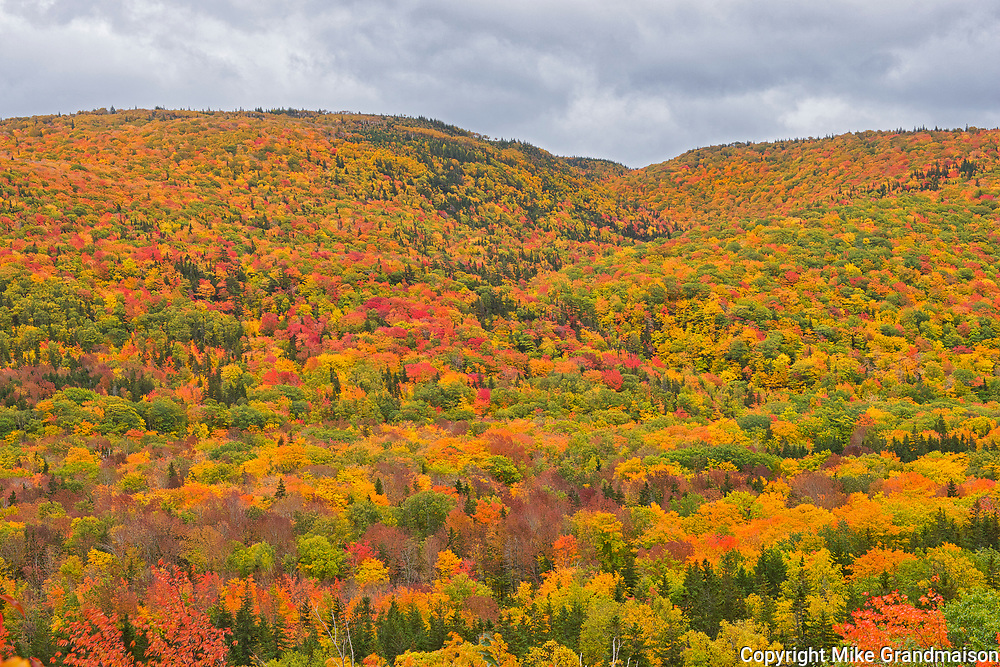 Acadian forest in autumn foliage<br />Cape North<br />Nova Scotia<br />Canada