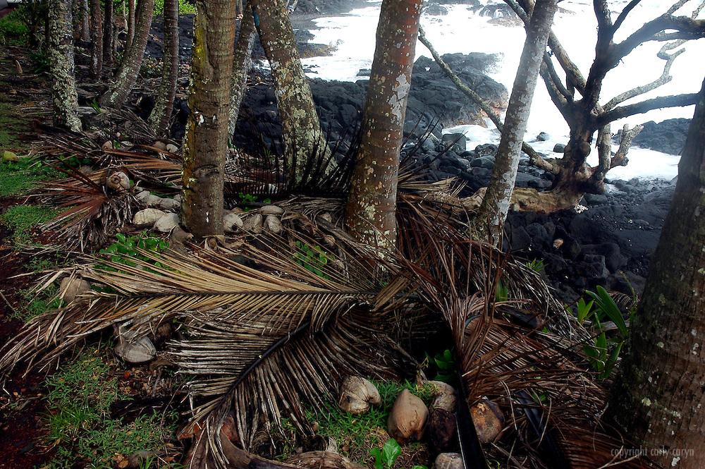 Puna Coast, Big Island