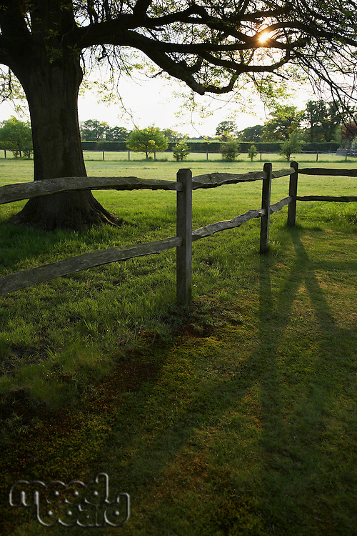 Wooden fence and tree on field