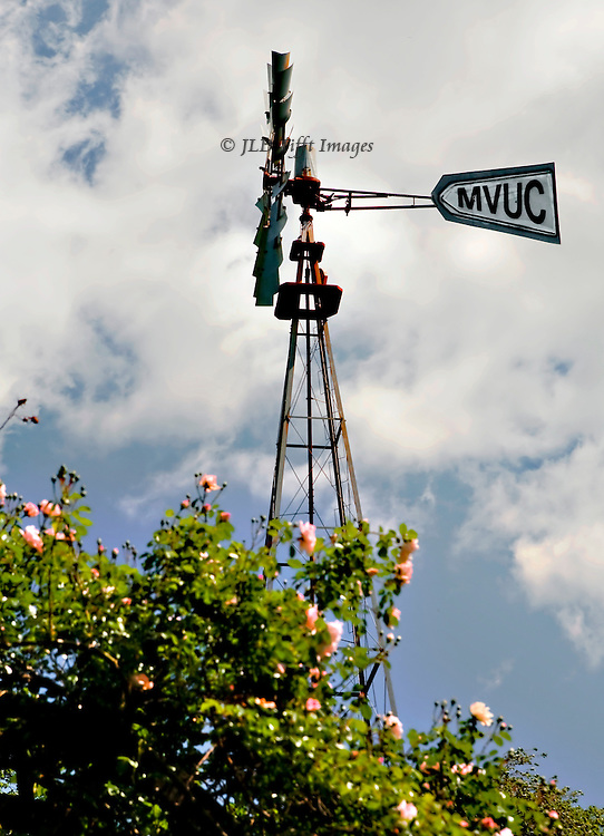 Restored windmill in spring, among blooming pink roses.