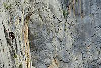 Rock climbers, Paklenica National Park, Velebit Nature Park, Rewilding Europe rewilding area, Velebit  mountains, Croatia