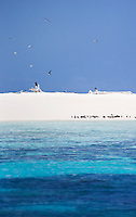 View of Michaelmas Cay, a protected sand cay which provides vital habitat for various species of seabird to breed. Great Barrier Reef, Queensland, Australia