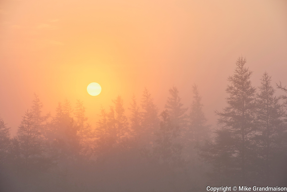 Trees and fog at sunrise <br />