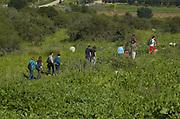 A group hiking through the fieldson the Judea hills, Israel
