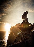 A monkey sits on top of a pillar near Uluwatu Temple, Bali, Indonesia.