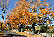 Baker Bridge Road, Lincoln, MA in full autumn color