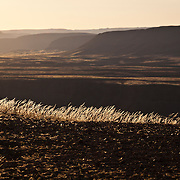 Golden grass catching the last bit of sunlight and wind. Fish River Canyon, Namibia.