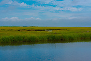 A lone egret stands in waters surrounded by grasses of the marsh