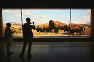 The Bison and Pronghorn exhibit at the American Museum of Natural History in New York City, NY.