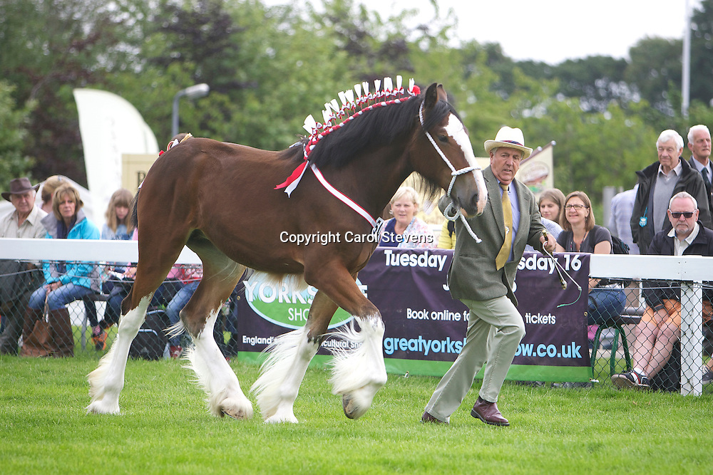 Frank Pickles and his bay filly Laurel Bank Scarlet  1 year  Sired by Wreathed Bowes Lyon