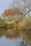 Balmorhea State Park, Cienga, desert wetlands, Reeves County, Texas, West, winter.