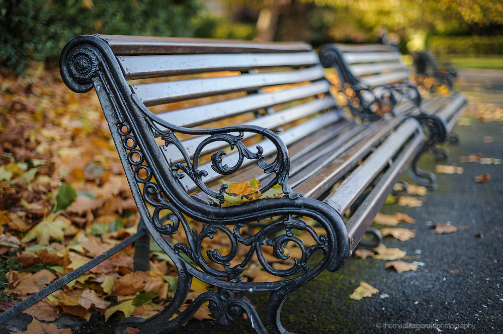 Park Benches and Autumn Leaves