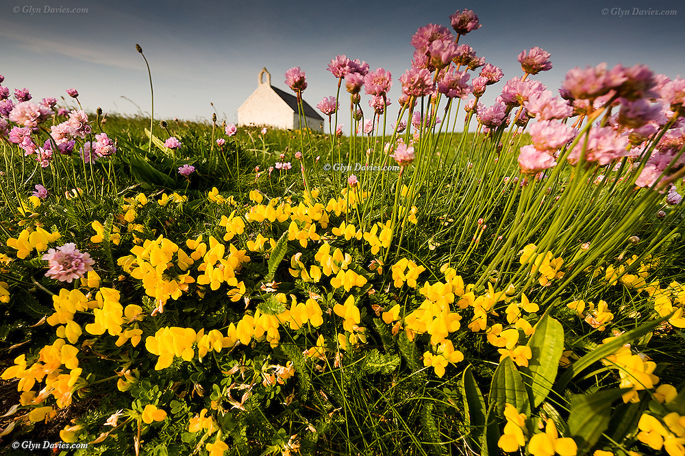 Lush Spring flowers grow amongst fresh new grass on the tiny island supporting the small church of Eglwys Cwyfan, near Aberffraw, Anglesey, North Wales. Services are still held in this church but are tide dependent.