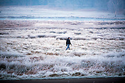 © Licensed to London News Pictures. 20/01/2015. Richmond, UK . A person walks across a frosty meadow. Deer graze in frost covered grasses in Richmond Park, Surrey today 20th January 2015. Britain is experiencing very cold temperatures. Photo credit : Stephen Simpson/LNP