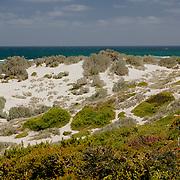 Seal Bay. Kangaroo Island.