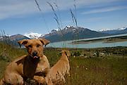 Estancia Nibepo Aike, in southern Patagonia.