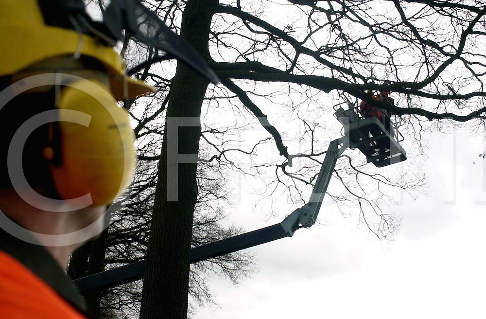 060405, dalfsen, ned,<br /> Snoeiwerkzaamheden aan de Rechterensedijk bij Dalfsen van bomen, Vorig jaar werd er al gesnoeid in de buurt van speeltuin Madrid meer richting Vilsteren,<br /> fotografie frank uijlenbroek&copy;2006 michiel van de velde