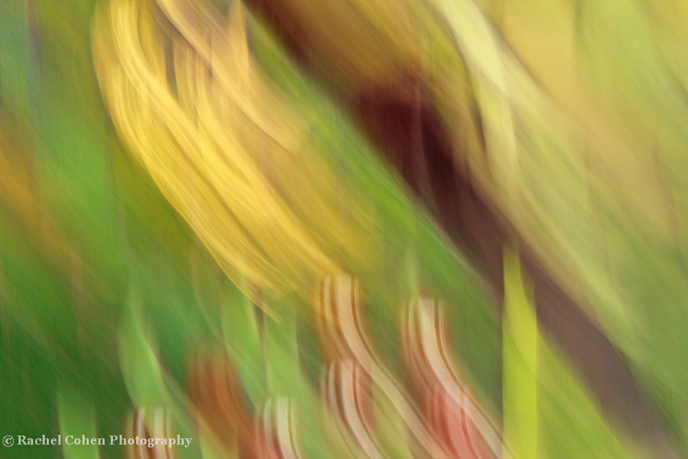 &quot;Ribbon Dance&quot;<br />