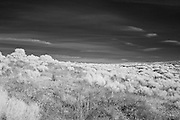 Desert scrub in Richland, WA.  a.k.a. The view behind my home.  Infrared (IR) photograph by fine art photographer Michael Kloth. Black and white infrared photographs