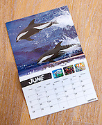 Hourglass Dolphin photo by Dave Walsh on Greenpeace Calendar 2015