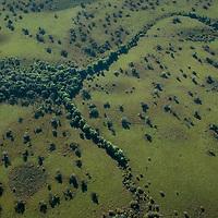 Vista aerea da Ilha do Bananal, Parque Nacional do Araguaia, , Tocantins, Brasil, foto de Ze Paiva, Vista Imagens.