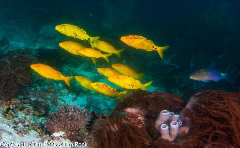 North & Central Raja Ampat, East Indonesia, Aug-Sept 2015 Raja Ampat 2015 (Aug-Sept), West Papua, Indonesia