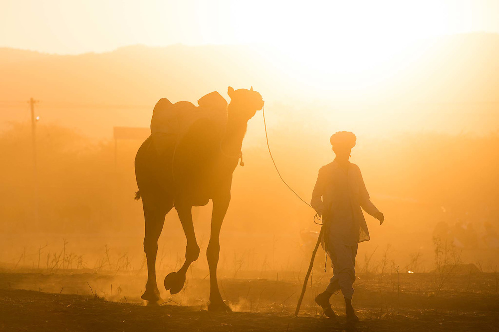 Early morning walk of the master and his camel through the golden sunrise of Pushkar.<br />