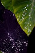Brumadinho_MG, Brasil...Museu de Arte Contemporanea de Inhotim (CACI). Na Foto detalhe de uma folhagem...Inhotim Contemporary Art Museum (CACI). In this photo, detail of a foliage..Foto: JOAO MARCOS ROSA /  NITRO