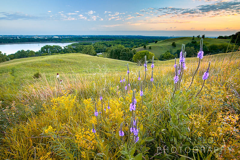 Minnesota River Valley bluffs with flowers at suset;  Minnesota.