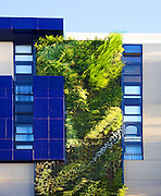 Patrick Blanc, a French botanist, has created his tallest vertical garden at a residential development in Sydney. The garden wall uses 4,528 native Australian plants that are fed by a grey-water dripper-irrigation system.<br /> Vertical gardens can offer a reduction in energy consumption through thermal insulation & cut down on greenhouse gas emissions.