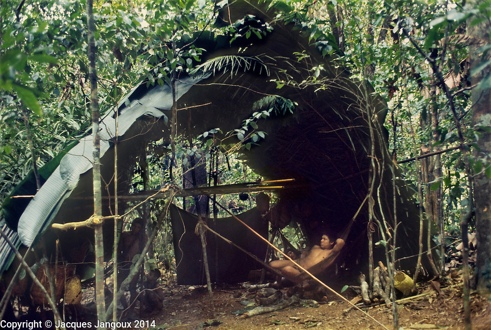 South America, Venezuela, Guiana Highlands: Hoti Indian man resting in shelter covered with Phenakospermum sp. leaves during travel in rainforest.