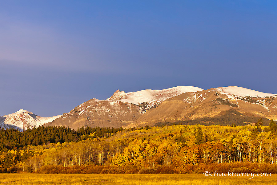 Autumn aspens with Bison Head, Mt Henry and Mt Ellsworth in Glacier National Park, Montana, USA