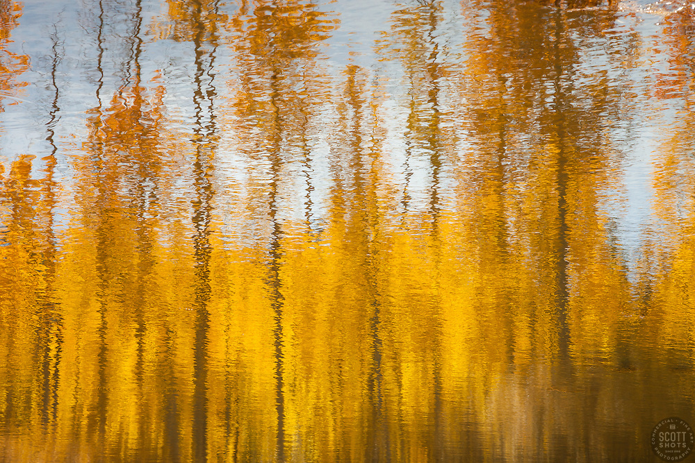 """Aspen Reflections 3"" - Photograph of yellow aspen trees reflection in the fall at a pond near Spooner Lake, Nevada."