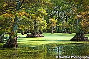 Back in Reelfoot Reel Foot Lake