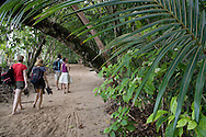 Tourists on trail behind beach - Cahuita National Park, Caribbean coast, Costa Rica.<br /> <br /> For pricing click on ADD TO CART (above). We accept payments via PayPal.