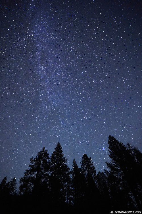 A view of the star filled sky and Milky Way above silhouetted tree tops.