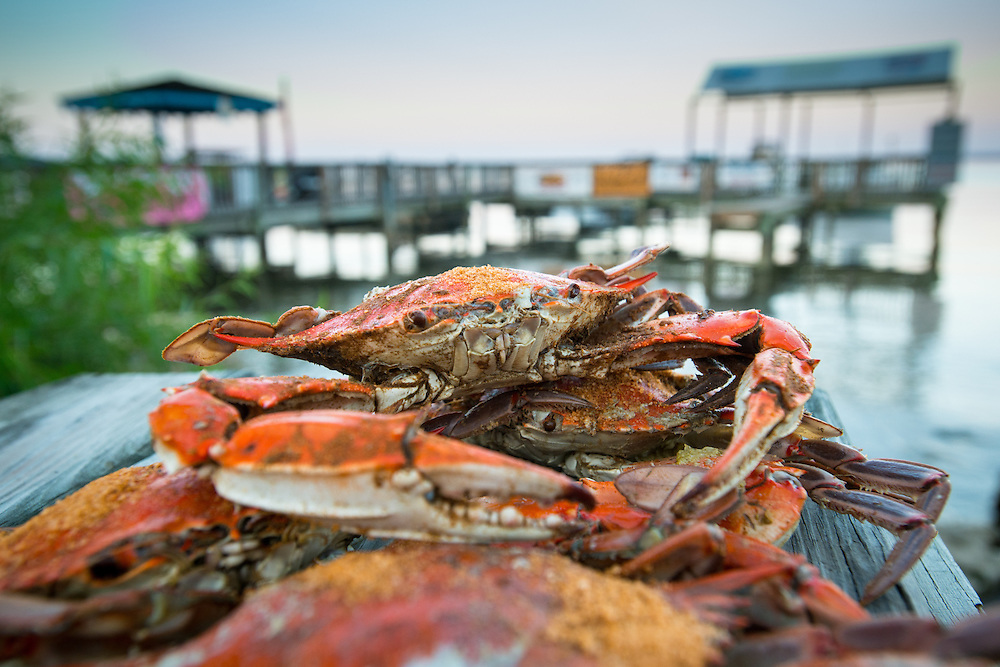 Steamed crabs with Old Bay seasoning on a pier by the shoreline